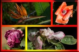 Caja de flores marchitándose